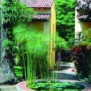 Jardin etnobotanico 3.