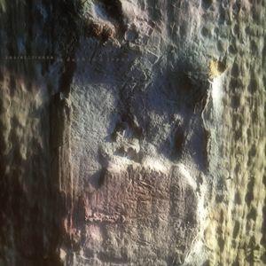 A Duck in a Tree - 31 July 2021 (Das Ding dingt)