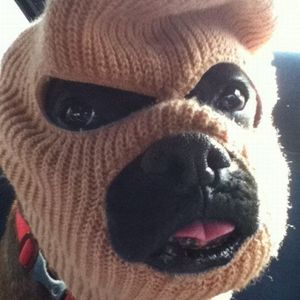 | nedfodder | ruskyb | ruskdogg |