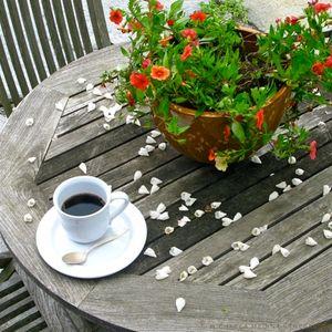 JFF 53 - Coffee On The Terrace