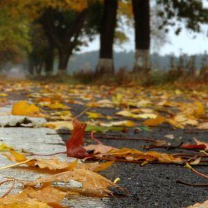 Herbstkontemplation 2012