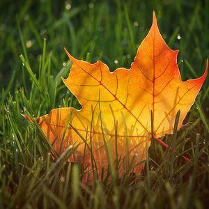 Autumn sensations