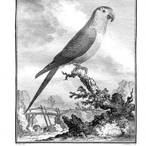 Le Salon Javanais - #6 - Les Oiseaux