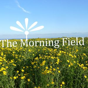 DR17 ::: Morning Field #2 ::: Biotopes in Future Perfect ::: 20170827