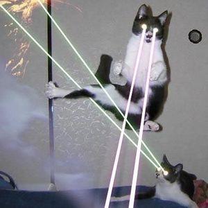 Clarky Kat