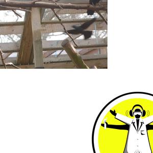 Animal Behaviour - Feathered Einsteins, Mischievious Meerkats and Monkey Vision