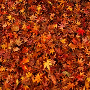 autumn mix '11