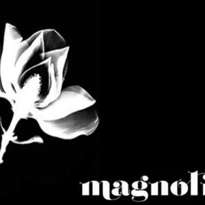 sesion grabada en magnolia club torre mayor
