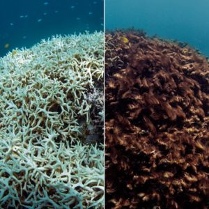 The demise of the Great Barrier Reef
