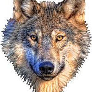 Nick lone wolf's the radio show. Less talk and more rock.