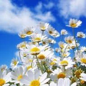 Danyel - Proljetna Inspiracija