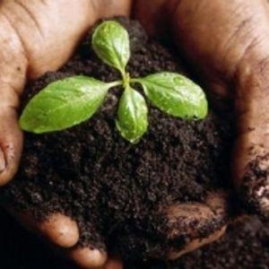 Agro-Caritas: ahol a természet és a közösség találkozik