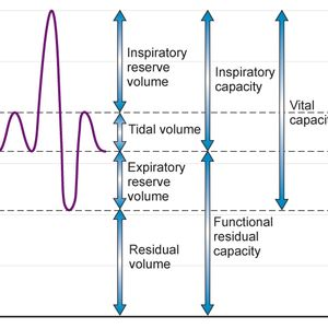 Theory – PG  – Respiratory System   Part 2