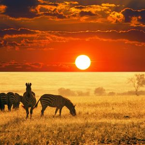 Dreamin' of Africa Mix - July 2016