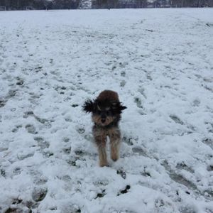 Henry Walks The Dog Mixtape # 1