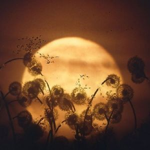 The light from the moon XII