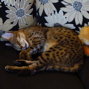 Couch Cheetah - Stamina (Dec 23rd 2015)