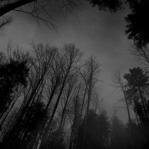 Greyman - Dark Forest
