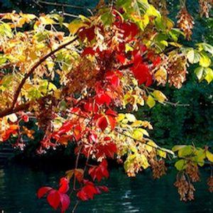 Groovotape Episode 1 : Autumn Flavour