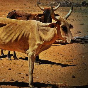 """É tempo das vacas magras"" (Monsenhor Jonas Abib) 11/07/01"