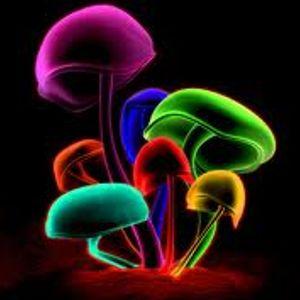 Mushroom Sessions 2