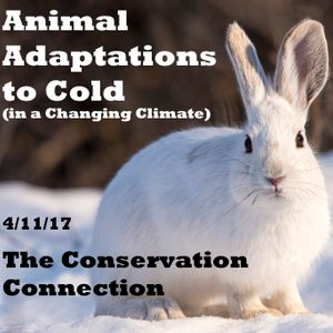 Conservation Connection ~ Adaptations to the Cold (4/11/17)
