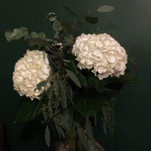 Foil w/ Gardener: 18th November '19