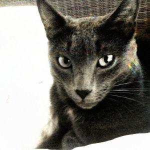 Cat_Kills_Mix_DosDos_2013_BeChosen_NeoStrictly_