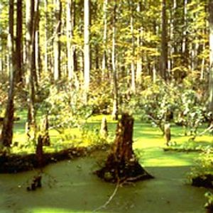 Rich Furness - Swampish Mix February 2012