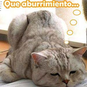 Nacho Catalinas@Que me aburría....