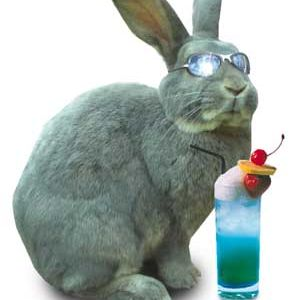 Hot Rabbits