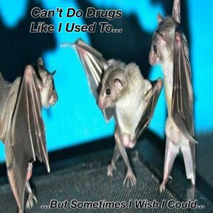 Can't Do Drugs Like I Used To (But Sometimes I Wish I Could)