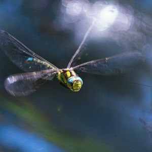 Dragonfly Whispers