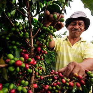 El Agro y más: El café nuestro de cada día 31-10