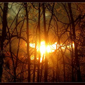 Deep In The Heart Of The Forest - DjMix - 23.01.2013 - Part II