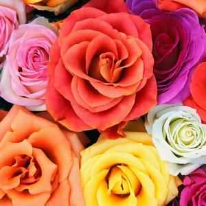 Das Rosas