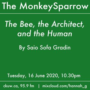 The Bee, the Architect, and the Human- by Saio Sofa Gradin.