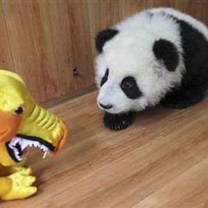 Wasted Pandaz a.k.a. S-Te-Panda Demo MIX