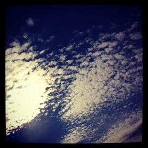 a bird flying through the erased sky