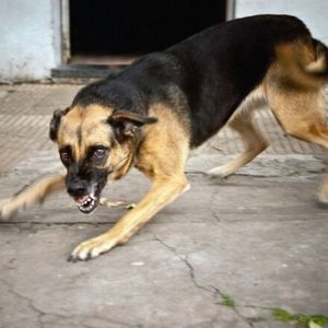 Suņa ķermeņa valoda: Kā suns mums vēsta par saviem pārdzīvojumiem