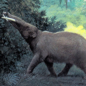 EXPLORATIONS SUR PLACE - Le mastodonte des Pyrénées