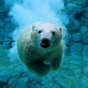 Radio Polar Bear 124.05 s01e01 Host OVXO|RIIIVXR