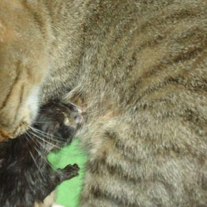 Chata's Mothership