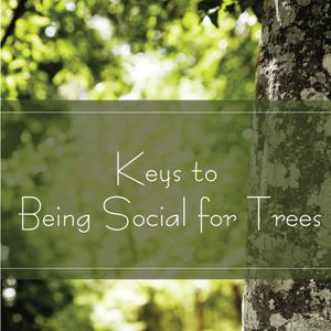 Keys to Being Social for Trees
