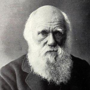 Darwin mixtape