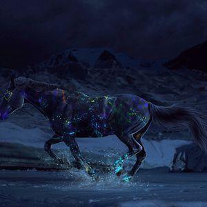 Night Time Gallop