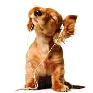 Music Therapy - August 2, 2016: About a Dog (Part 1 of 2)