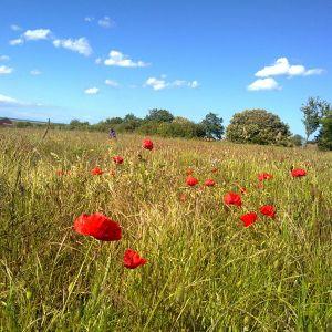Hungover: Poppies (Chorlton FM) 11-11-12