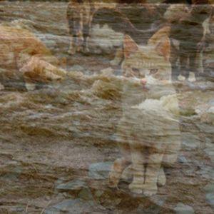 La rivière des chats /