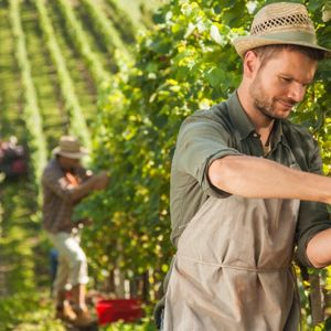 RADIO EFFE    Nuovi agricoltori cercasi, Confagricoltura presenta la nuova sede
